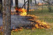 Третий день борются с лесостепными пожарами в Костанайской области
