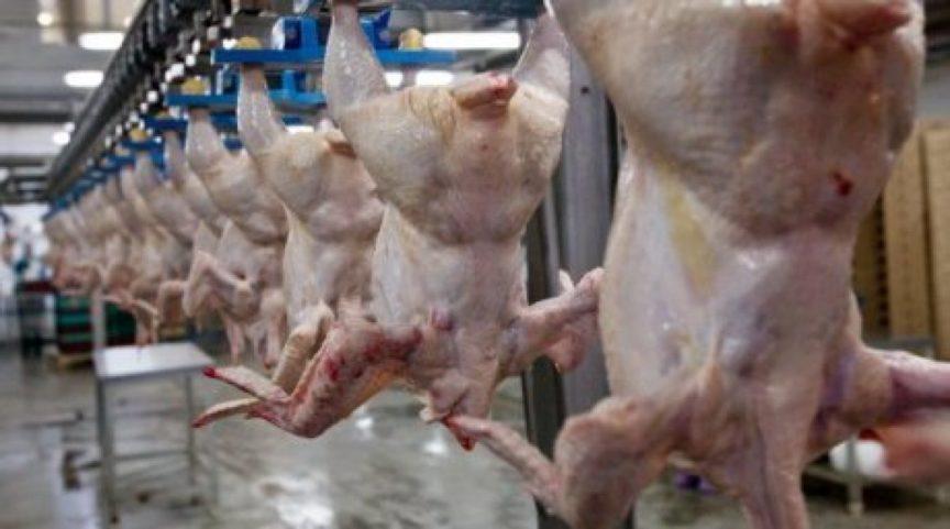 В Костанайской области в мясе птицы тоже выявлена сальмонелла