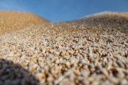 Семена «элиты» весной костанайские аграрии смогут получать бесплатно