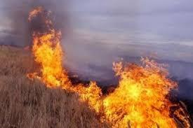 Территория Наурзумского заповедника горела в Костанайской области