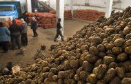 Картофелеводы Казахстана нацелены на Европу