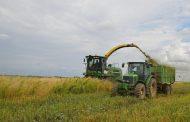 Урожай сахарного сорго впервые получат в Карагандинской области