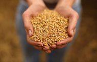 Как учёные помогают казахстанским аграриям сэкономить