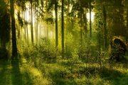 Южный Урал отправил в Казахстан 37,5 тыс. кубометров леса