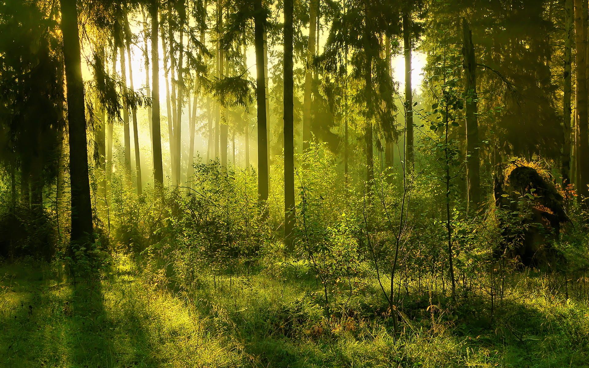 Казахстан ввел полугодовой запрет на экспорт лесоматериалов
