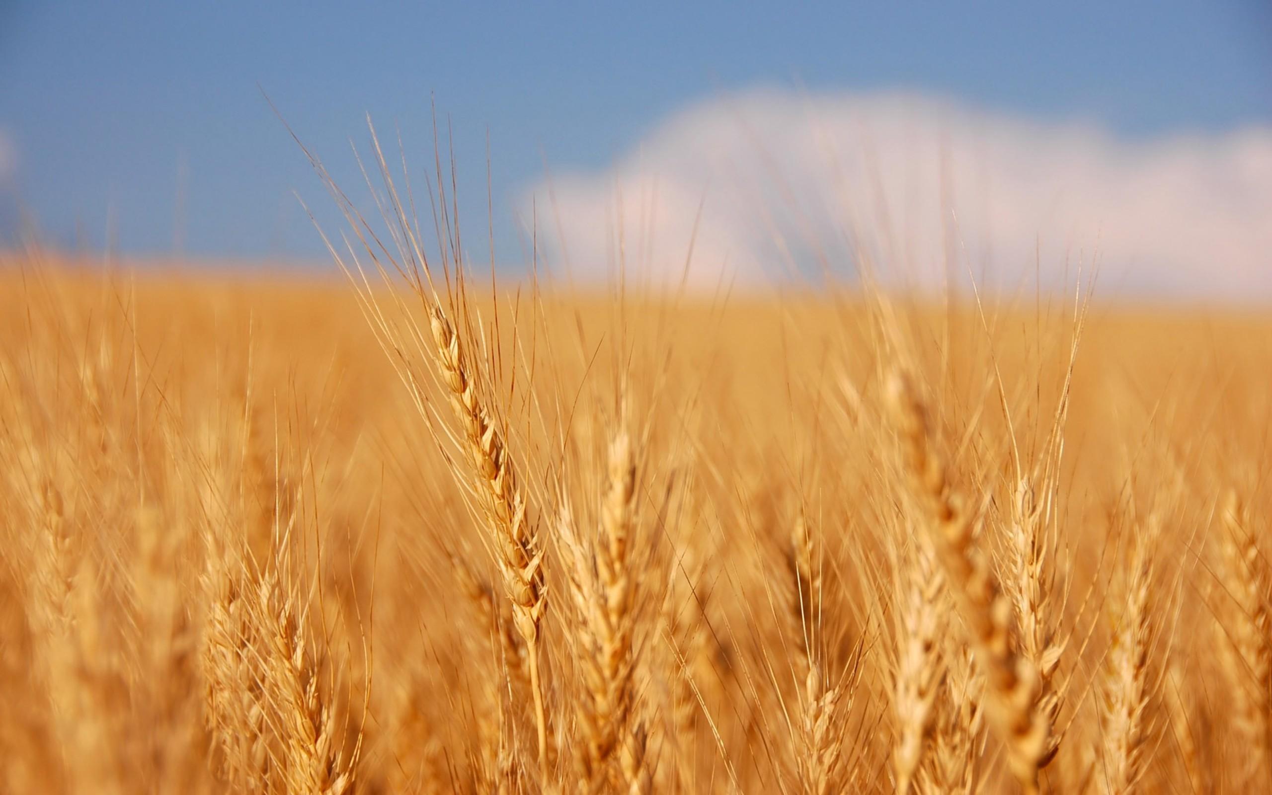 Тюменские предприятия отправили в Казахстан сотни тонн семян