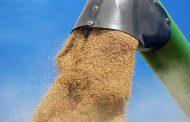 22,1 млн тонн зерна намолочено в Казахстане