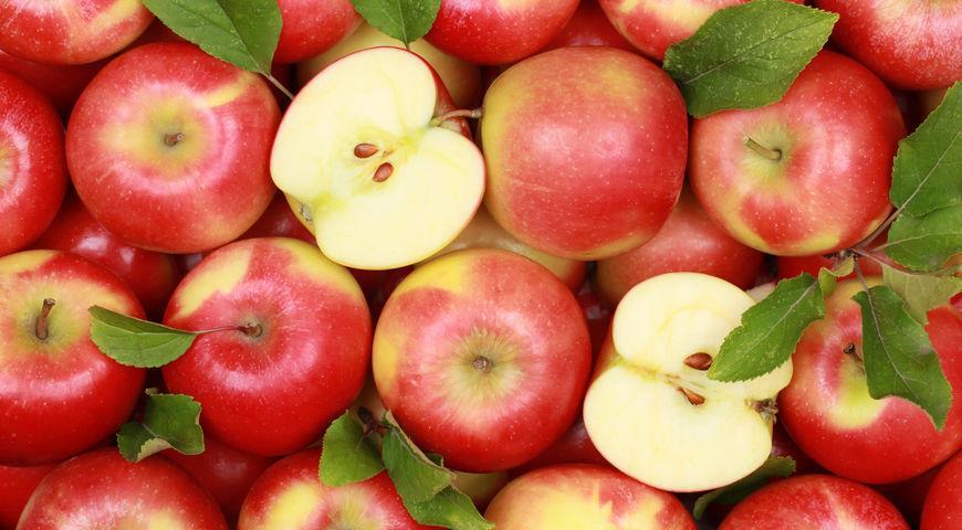 На границе под Карабалыком задержали 20 тонн свежих яблок