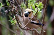 Спецкурс по орнитологии планируют включить в школьную программу
