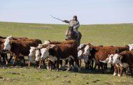 Иностранные инвесторы стали меньше интересоваться сельским хозяйством Казахстана