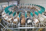 Всемирный банк выделит $500 млн на реализацию госпрограммы Минсельхоза Казахстана