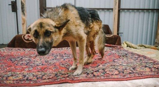 Казахстанцы просят правительство защитить бездомных животных