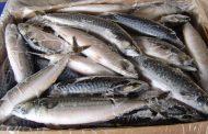 Более тонны рыбы незаконно перевозил житель Казахстана через Алтайский край