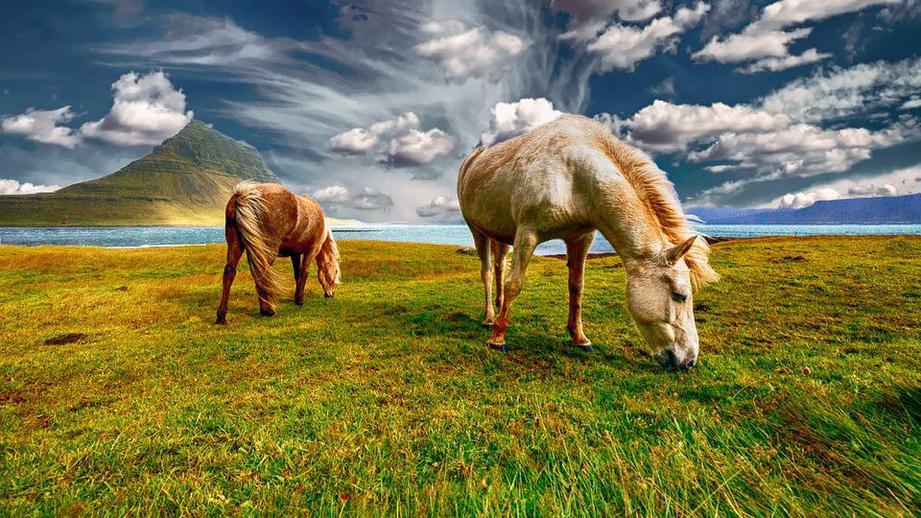 Samsung поможет в поиске пропавшего скота в Казахстане