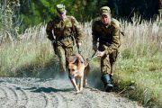 Вор и насильник пытались сбежать из Костанайской области в Россию