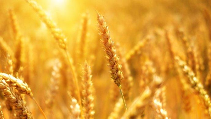 Крестьянские хозяйства оказались на грани разорения