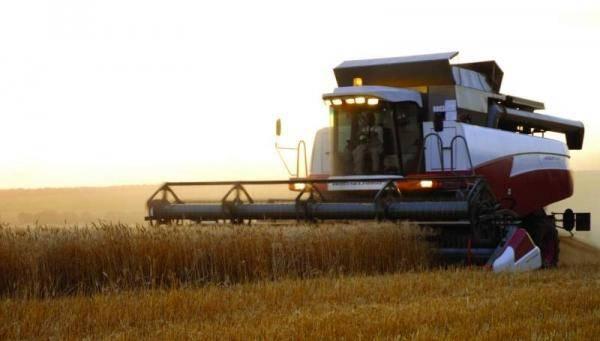 Омское зерно утекает в Казахстан