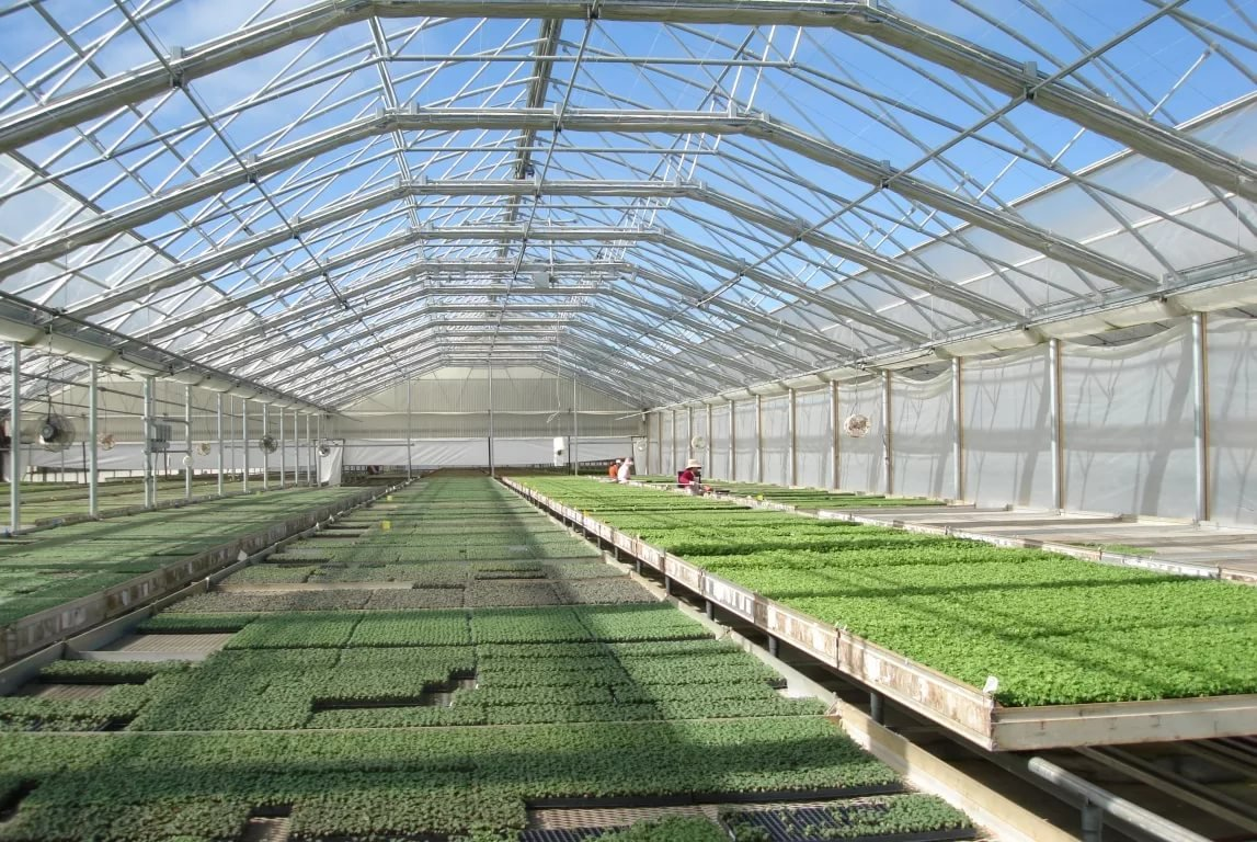 Тепличные овощи в Казахстане подскочили в цене на 19–20% за месяц, пшено и рис — на 5% и 2% соответственно