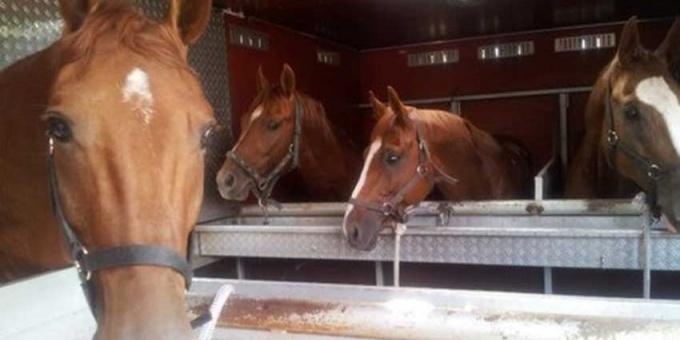 Лошадей из Хакасии не пустили в Казахстан