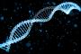 Управлять активностью генов помогают «светофоры» в ДНК