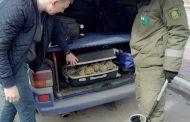 Чемодан с сухопутными черепахами пытались вывезти из Костаная в Челябинск