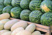 Взять под контроль продавцов арбузов и дынь, торгующих вдоль трасс, поручил аким Костанайской области