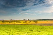 Костанайским аграриям на заметку: челябинские поля заражены блошками
