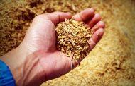 Челябинский Россельхознадзор вернул в Житикару 275 кг риса