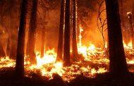 Молодые деревья сгорели в Восточном Казахстане