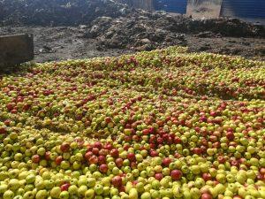 В Россию под видом казахских яблок пытались провезти «санкционку»