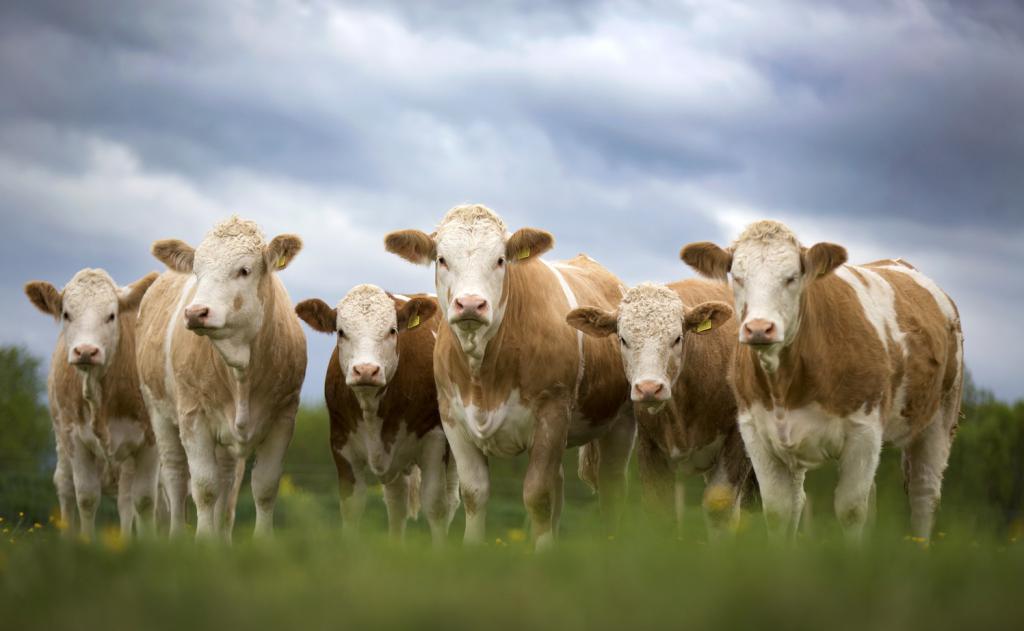Казахстанские фермеры предложили внести поправки в программу кредитования «Сыбаға»