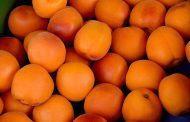 Челябинский Россельхознадзор не пропустил из Казахстана 20 тонн абрикосов