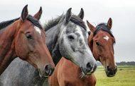 Похищенных в Казахстане лошадей нашли в Саратовской области