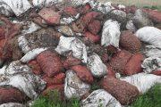 Хозяина выброшенного возле лесопосадки за чертой города картофеля нашли