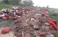 Житель поселка Джамбул готов бесплатно раздать десятки тонн картофеля
