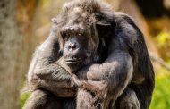 Администрация зоопарка в Нур-Султане заплатит $130 за укушенную обезьяной девочку