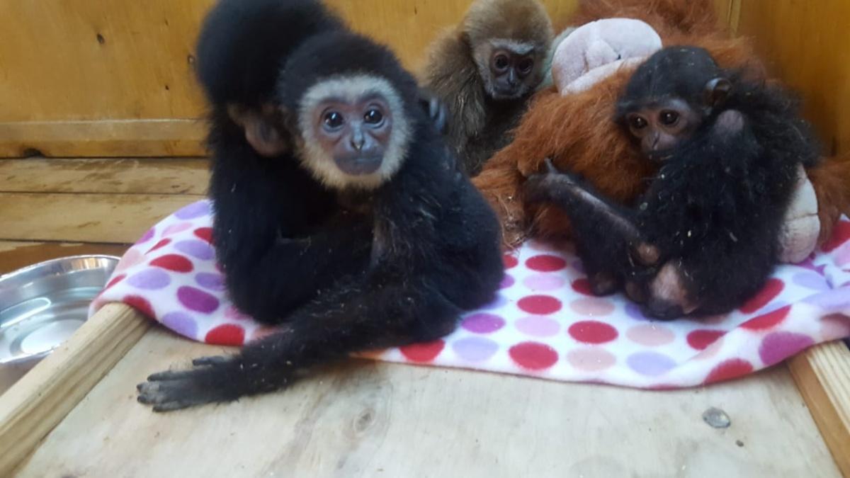 Редких обезьян пытались незаконно вывезти из Казахстана в Челябинск