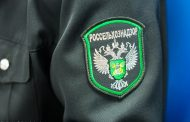 Россия зеркально ответила на ограничение поставок в Казахстан