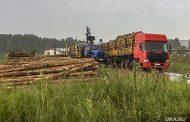 «Черные лесорубы» год вывозят в Казахстан сотни кубометров леса из-под Екатеринбурга