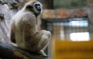 Россиянина с 26 обезьянами задержали на границе Казахстана