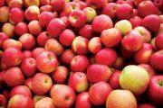 На Южный Урал из Казахстана везли 20 тонн яблок под видом моркови
