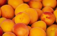 В Казахстане планируют построить завод по переработке абрикосов