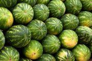 В Тюменскую область не пустили арбузы из Казахстана