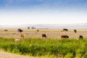 Казахстан запретил экспорт живого скота