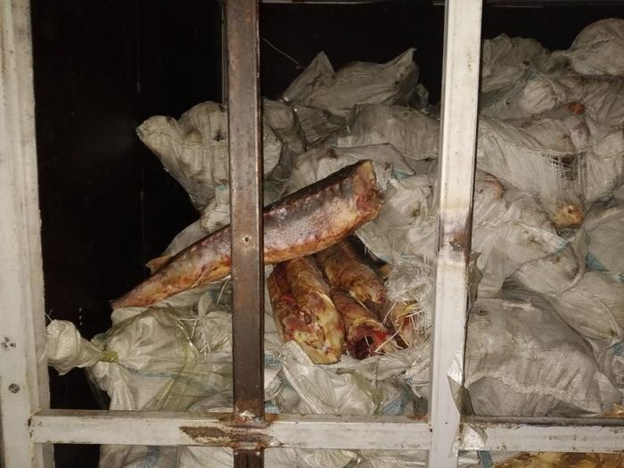 На границе Оренбуржья с Казахстаном изъято 4 тонны контрабандного осетра