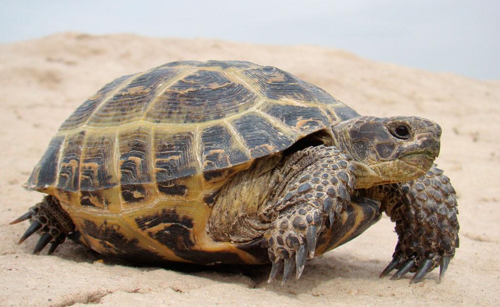 В Оренбурге нашли четыре тысячи незаконно привезённых из Казахстана черепах