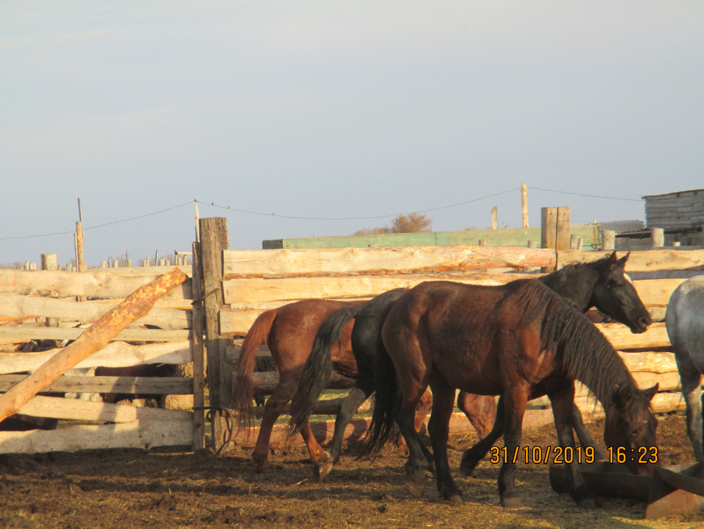 Табун лошадей неизвестного происхождения пытались незаконно вывести в Казахстан