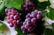 На автодороге Челябинск-Костанай задержали 17 тонн винограда