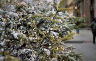 Россия чуть не оставила Костанайскую область без новогодних елок