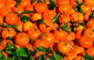Россельхознадзор вернул в Казахстан 100 тонн мандаринов
